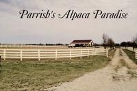 Parrish's Alpaca Paradise - Logo