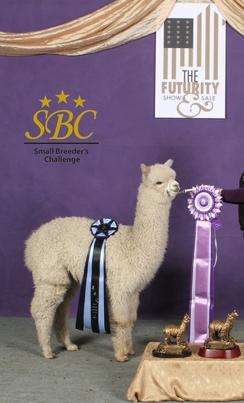 Bonecrusher winning at Small Breeders Challenge