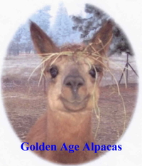 Golden Age Alpacas - Logo