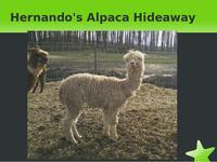 Hernando's Alpaca Hideaway - Logo