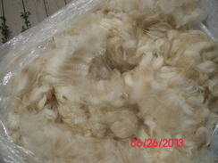 Photo of Raw Alpaca Fiber