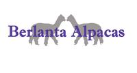 Berlanta Alpacas - Logo