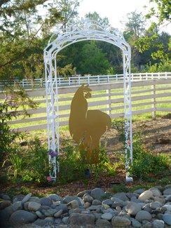 Alpaca Ranch in Redding, California