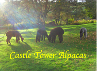 Castle Tower Alpacas - Logo