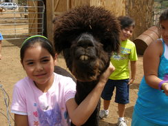 Get 'Up Close and Personal' with Alpacas at AlAnn Ranch!