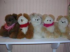 Photo of Alpaca Bears (medium)