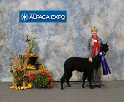 1st for Perseus in his first show