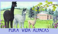 Pura Vida Alpacas LLC. - Logo