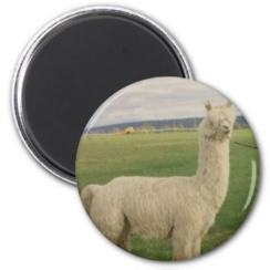 Photo of Alpaca Magnet