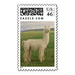 Photo of Alpaca Stamp