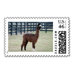 Photo of Alpaca Stamp 6