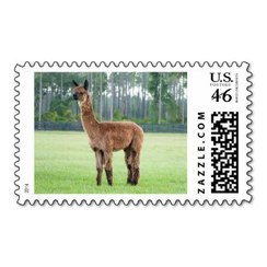 Photo of Alpaca Stamp 7