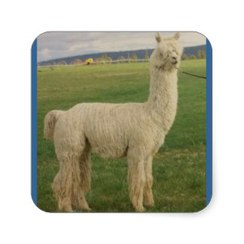 Photo of VA VA VA VOOM Alpaca Sticker