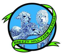 Breezy Hill Boutique - Logo