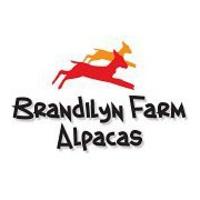 Brandilyn Farm Alpacas  - Logo
