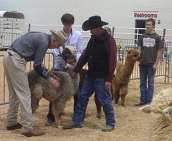 Herd Evaluation & Breeding Goals