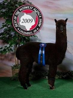 Alpaca Herdsires Heatherbrook S Mercury Huacaya Herdsire Male Proven Connecticut Thompson