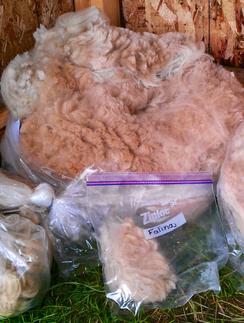 Fawn Fleece for Sale