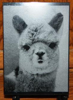 Custom Marble Alpaca Etchings!