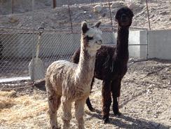 Caesar and Immy