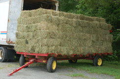 Photo of Hay For Sale