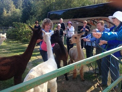 Photo of Group Fun with Alpacas and Felt Activity
