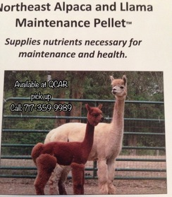 Alpaca Feed - Maintenance Pellet