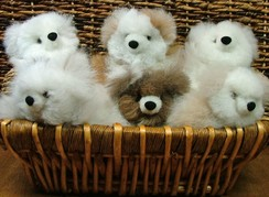 Baby Teddy Bears