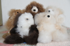 Stuffed Animals - Small Bears