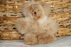 Photo of Stuffed Animal - Bears & More Bears !!!