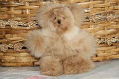 Stuffed Animal - Bears & More Bears !!!