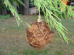 Photo of Fiber Bird Nesting Materials