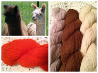 Blue Chip Stock Alpaca Treasures - Logo