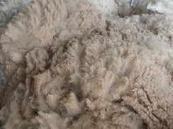 Photo of Fleece skirting