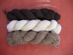 Photo of Yarn-Local