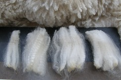 Washed White Alpaca Fiber SOLD