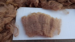 Photo of Raw Washed Fawn Fiber SOLD
