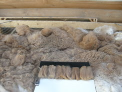 Photo of Raw Washed Lt Rose Fiber SOLD
