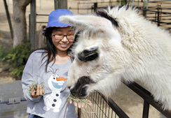 Feeding Einstein the Llama
