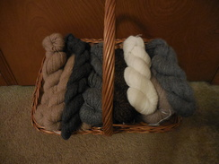 Photo of Our Own Yarn!