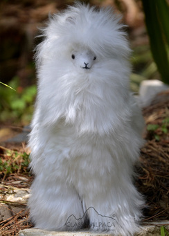 Photo of PREMIUM Baby Suri Fur-14 inch Alpaca