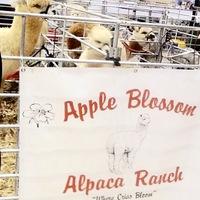 Apple Blossom Alpaca Ranch - Logo