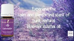 Lavender- 15 ml (#3575)