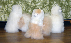 "Alpaca Fleece 12""Alpacas-Includes Shpg"
