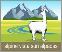Alpine Vista Suri Alpacas LLC - Logo