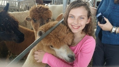 Snuggle time with the alpacas