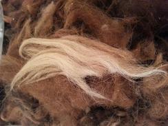 FWF Alpacas  Bird Nesting Material