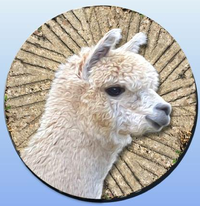 Alpaca Of Whitaker's Mill - Logo