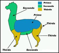 Alpaca Shearing Guide