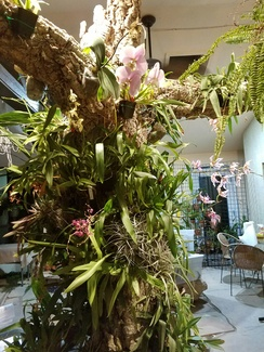 Finished tree with Orchids in bloom